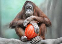Дом приматов в зоопарке: культурная революция на планете обезьян