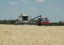 Воронежские аграрии собрали более 3 млн тонн зерна