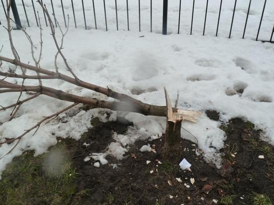 В Воронеже построят парковый пояс на месте вырубленных лесов