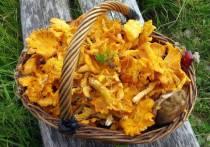 В Подмосковье собирательница грибов вызвала «скорую» из колодца