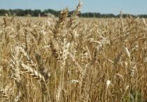 Воронежскую область накрыл невиданный урожай