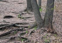 Московские деревья и кустарники пересчитают со спутника